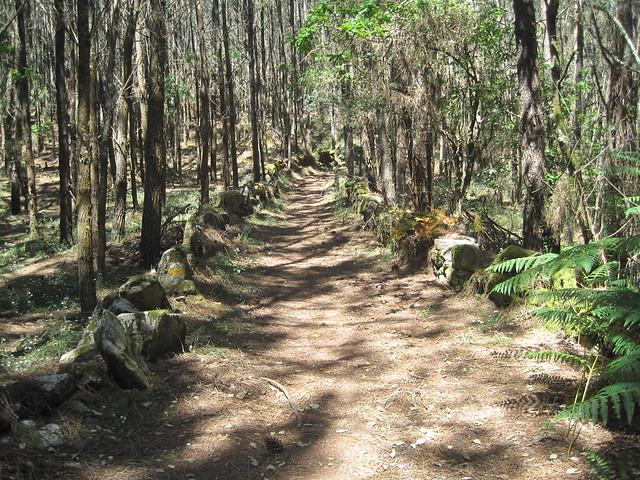 Camino en la Subida á Pedra do Cadro en Esteiro
