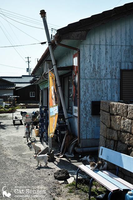 Kagawa Cat Color #010