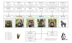 Gorilla Family - Wuppertal 2013