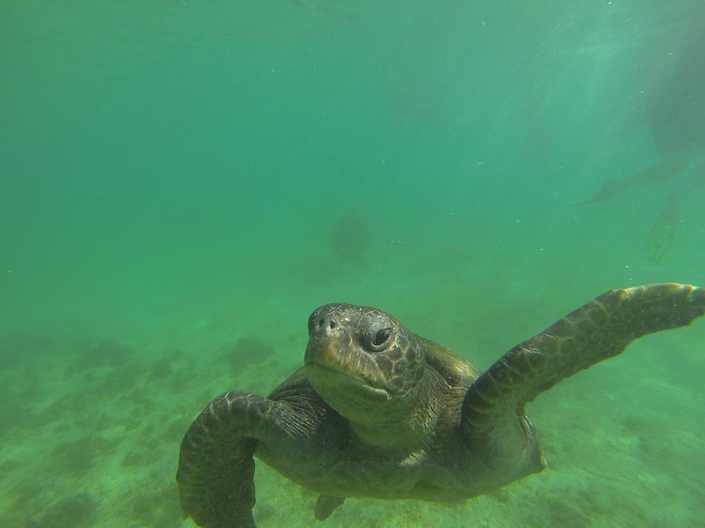 Isla Isabella, Galapagos