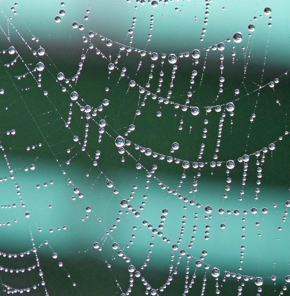 Wet Pearls