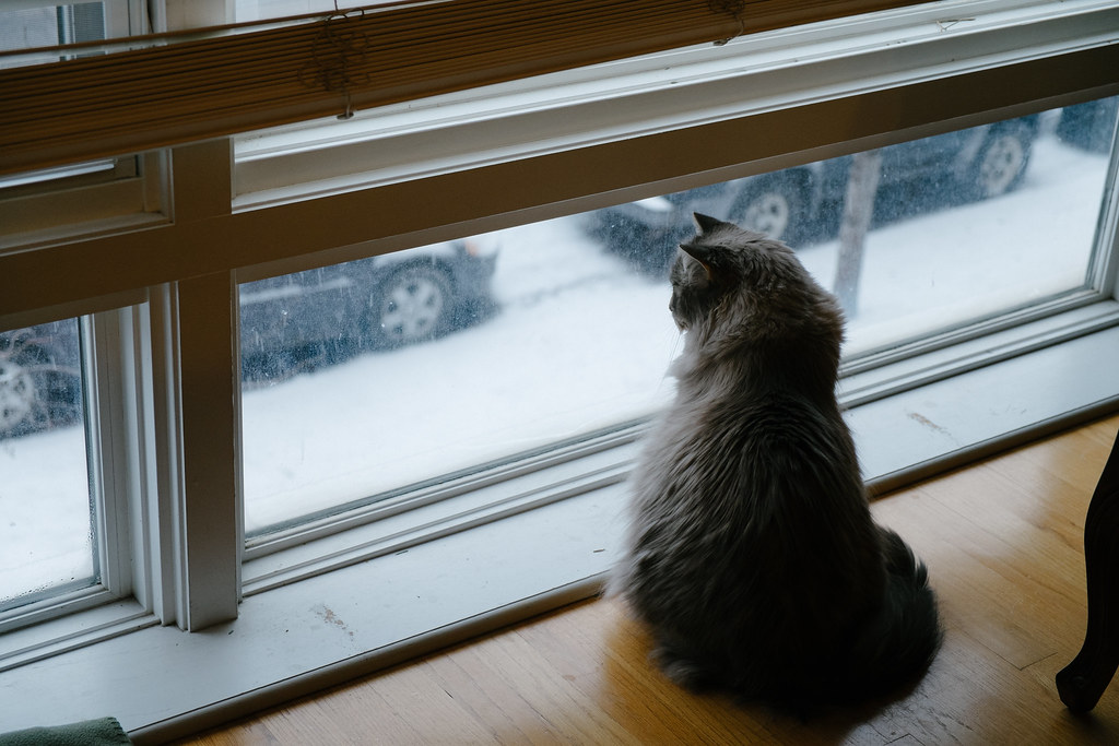 Ted watches the snow