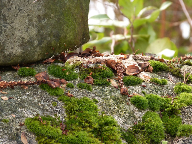 honeygrove2