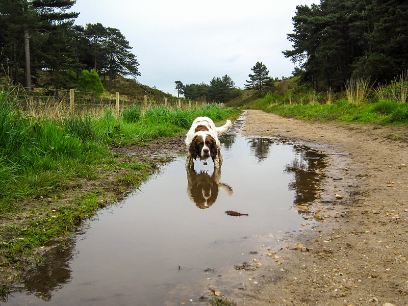 Another day, another puddle!