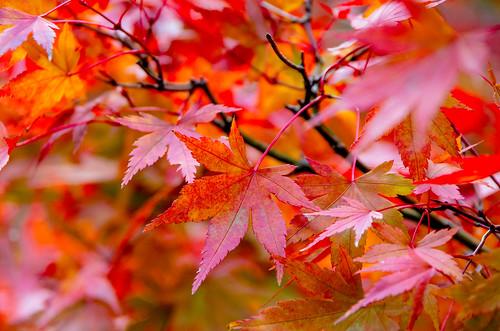 紅葉狩り - 東山公園 06