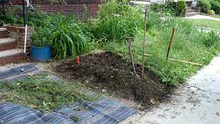 "Weeding is Meditation: Removing the old ""lawn"" for the new short-grass ""meadow"" in the front yard"