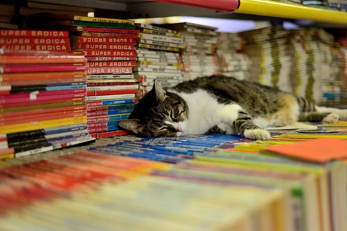 Bookshop with sleeping cats