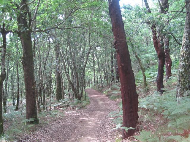 Sendero en el PR-G 93 Ruta da Ribeira do Ulla