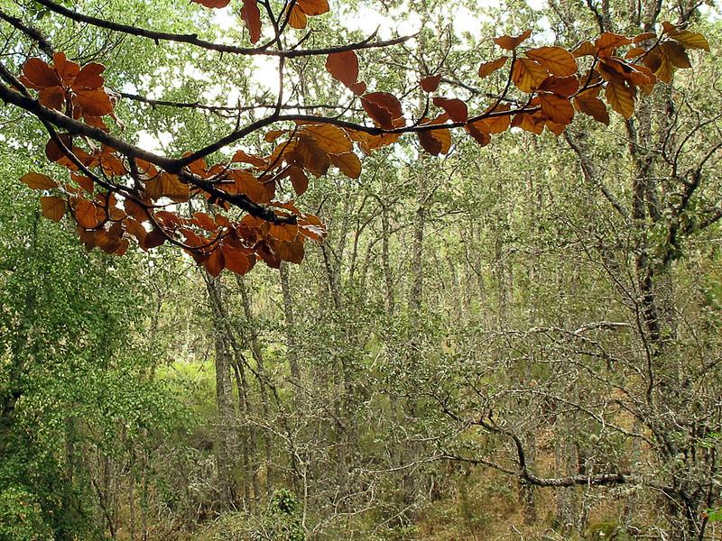 Se asoma el otoño  ✿◠‿◠