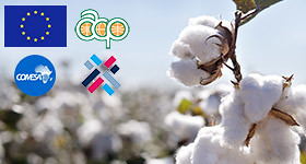 Zimbabwe launches Cotton-to-Clothing Export Strategy - thumbnail