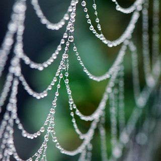 Drip Drops and the Spider Web | by bitzcelt