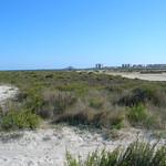 lo-pagan_playa-villananitos_sendero-encanizadas_playa_llana25