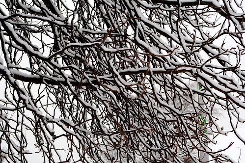 Snowy branches | by robpatrick
