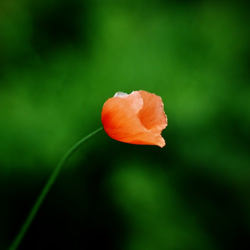 One millionth flower on flickr | by grilkip