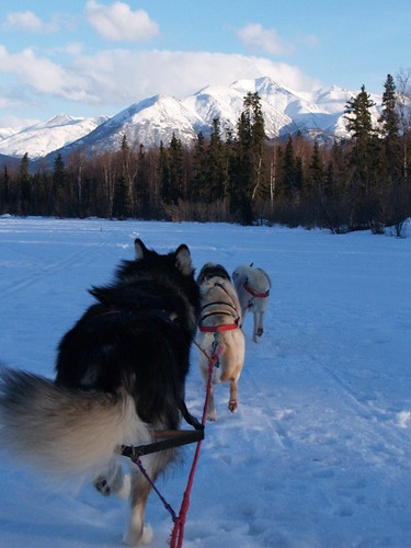 Sled Dogs in Alaska | by Len Radin