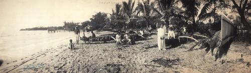 HI Beach at Waikiki 1902