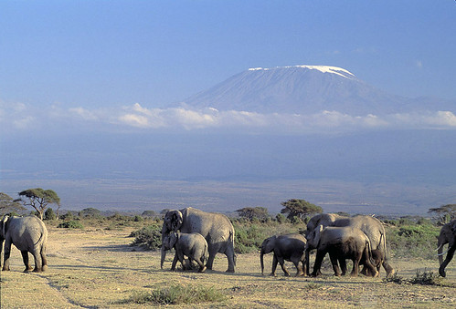 Elephants | by World Bank Photo Collection