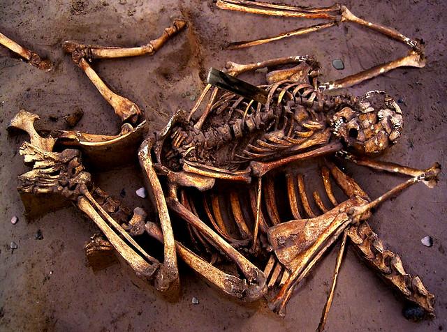 More Vampire bones