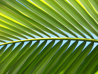 palm fronds | by edenink