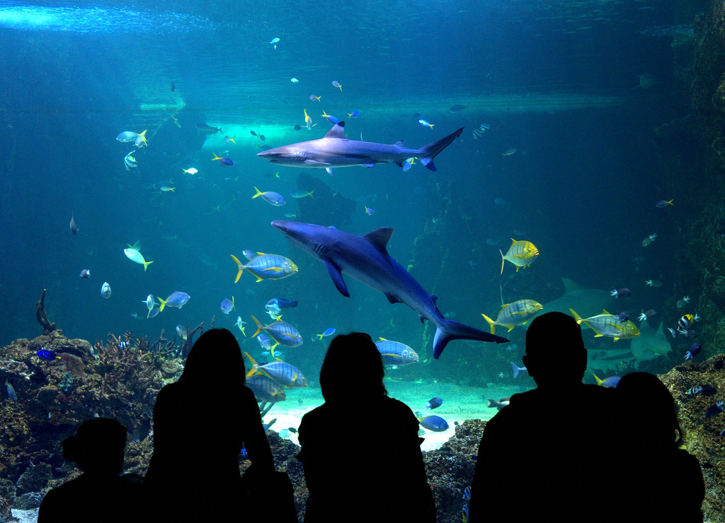 The absolute best tourist attractions in sydney they get for Shark fish tank