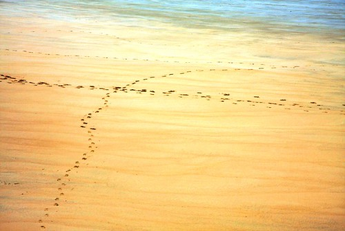 Follow My Footprints | by Rudy  VEGA
