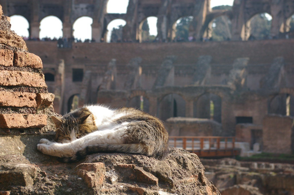 Chat au repos et Colisée à Rome - Photo de debs-eye @ Flickr