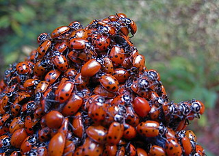 Love Bugs | by jurvetson