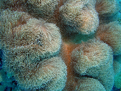 Waving Coral | by Henry & Tersia