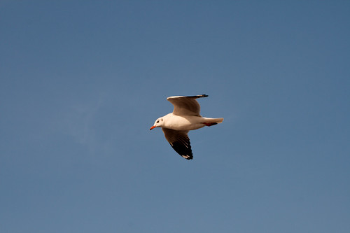 Bird flying over our boat | by Christian Haugen