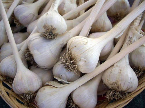 Hard Neck Garlic | by swampkitty