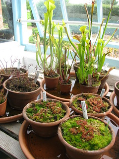 DarwinCarnivorousPlants | by GrrlScientist