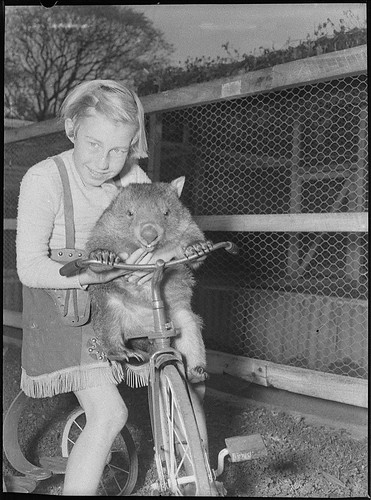 Cary Bay Zoo, Lake Macquarie, NSW, 1954 / Sam Hood | by State Library of New South Wales collection