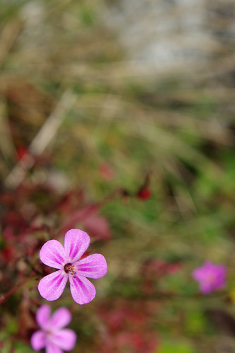 Wild Flowers - Picos de Europa | by The Hungry Cyclist