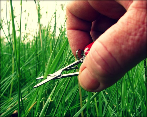 cut the grass | by circulating