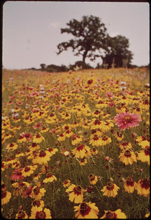 Flower meadow in Llano, Texas | by The U.S. National Archives
