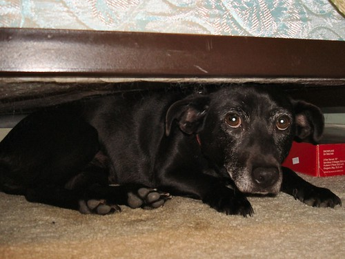 Jan 9, 2009 - Missy hides under the bed | by Dennis from Atlanta