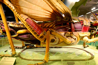 Giant Anatomy of a Grasshopper | by Curious Expeditions