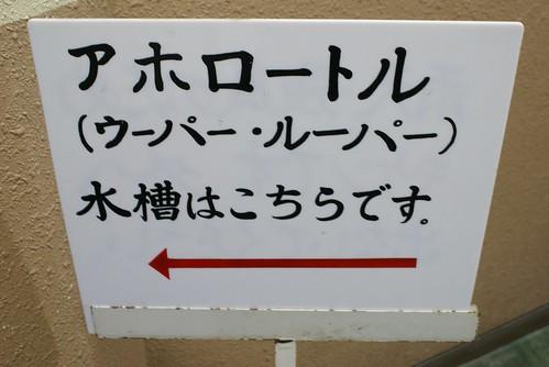 寺泊水族博物館2008冬