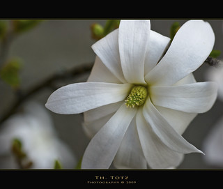 White blossom | by def110