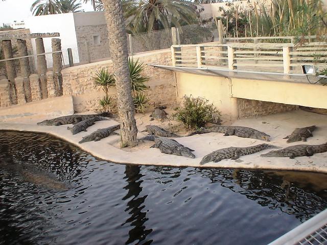 Crocodiles dans un parc à thème à l'ile de Djerba