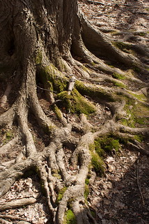 exposed roots | by herb.g