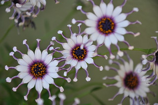 Alien flowers | by M*LoW - Massimo