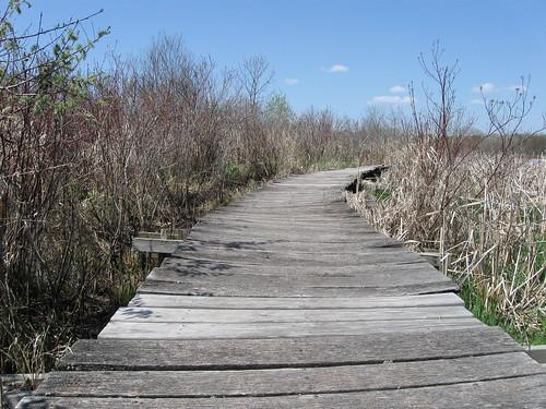 View along the boardwalk, Cherokee Marsh