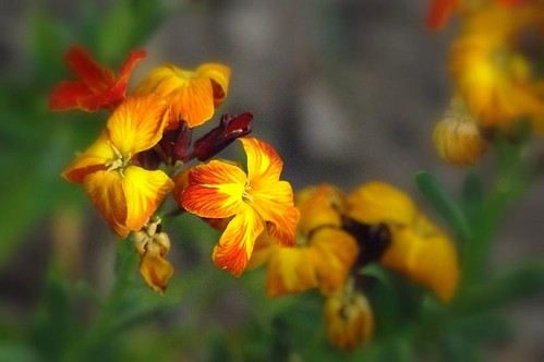 Wallflower | by mamietherese1 in vacation