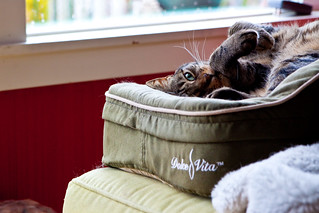 Aki in Heated Bed | by chumpboy