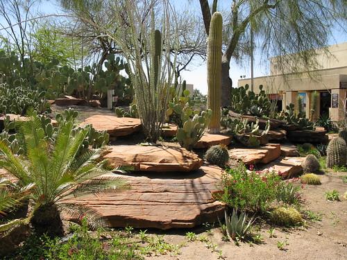 Img 0239 Ethel M Botanical Cactus Garden Aa440 Flickr