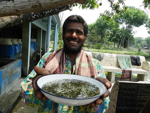 Fish fry from a nursery in Jessore, Bangladesh. Photo by Md Masudur Rahaman, 2012.