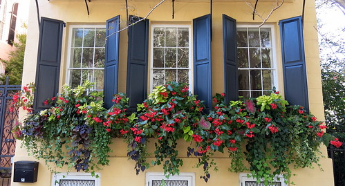 Window boxes in November, Charleston, SC