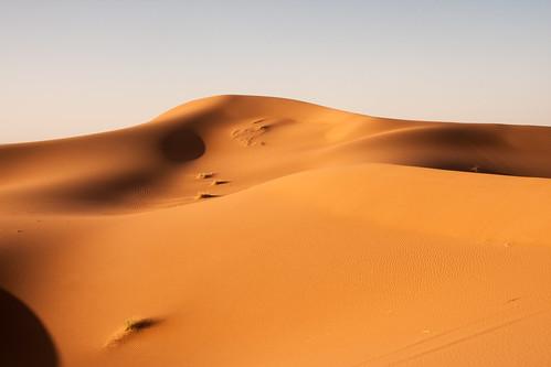 Sand dune at dawn in the Sahara