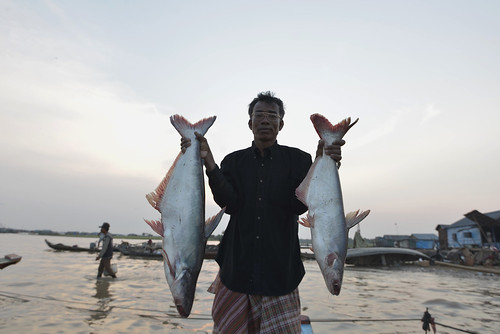 Local fisherman showing his catch at Chhnoc Trou pier, Kampong Chhnang province, Cambodia. Photo by Sylyvann Borei.